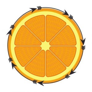 orange fruit circle