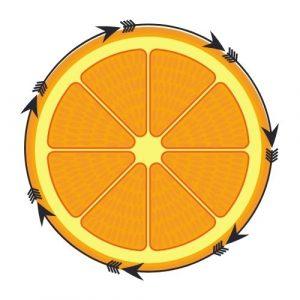 orange fruit circle